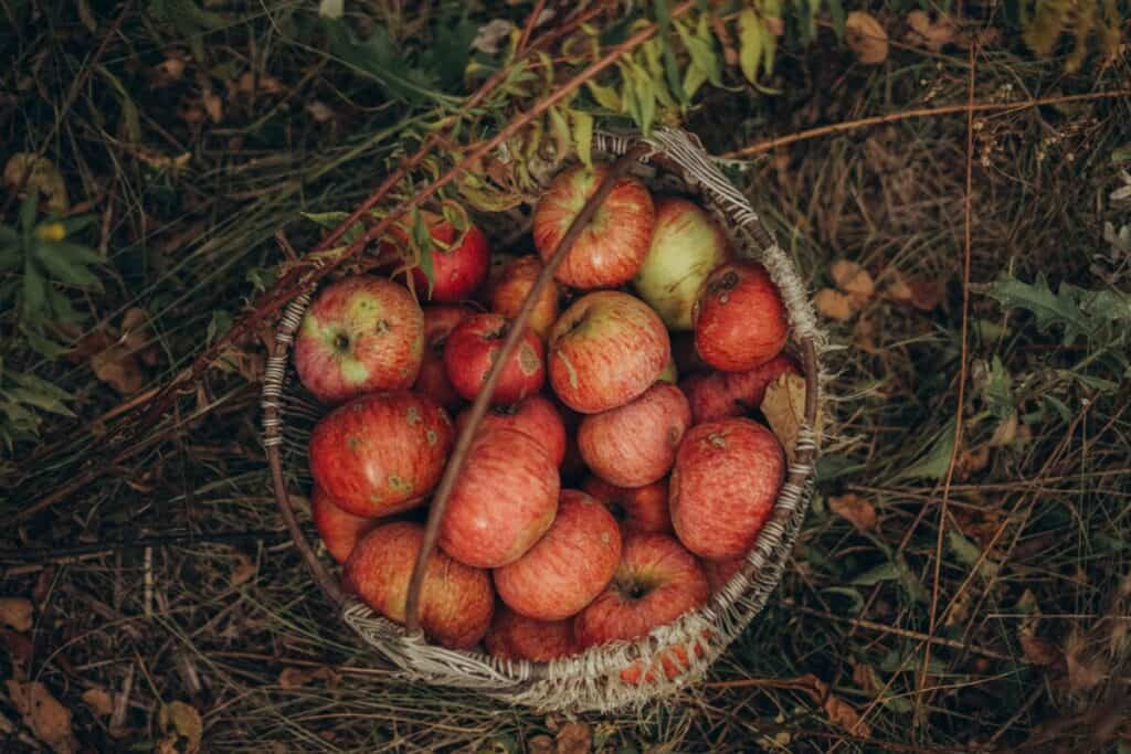 Tradicionalni slovenski zajtrk: Zajtrk s sadjem – super dan
