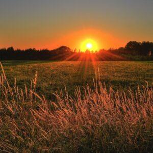 sonce in travnik