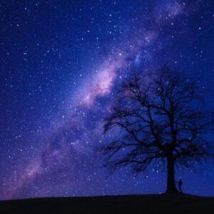 zvezde in drevo
